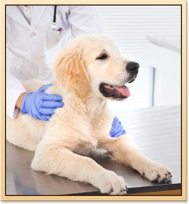 Vaccinations for Tulsa Pets